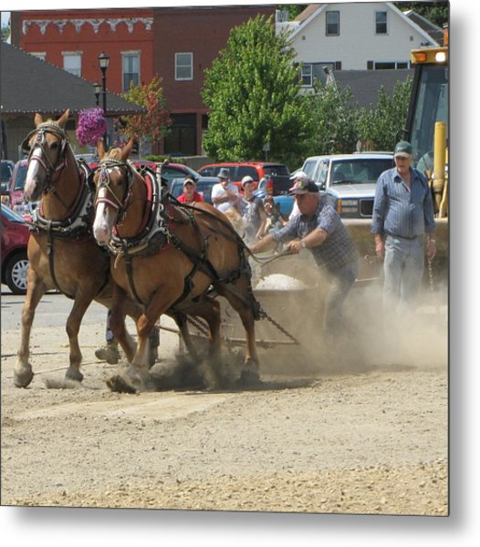 Horse Pull K Metal Print by Melissa Parks