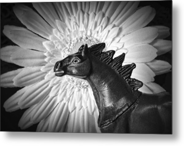 Horse Startled By A Daisy Metal Print
