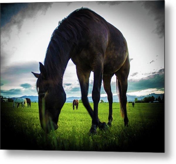 Horse Time Metal Print