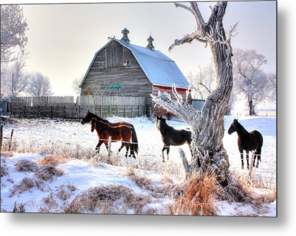 Horses And Barn Metal Print