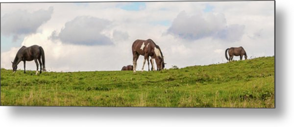 Horses And Clouds Metal Print