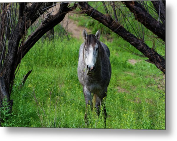 Horse's Arch Metal Print
