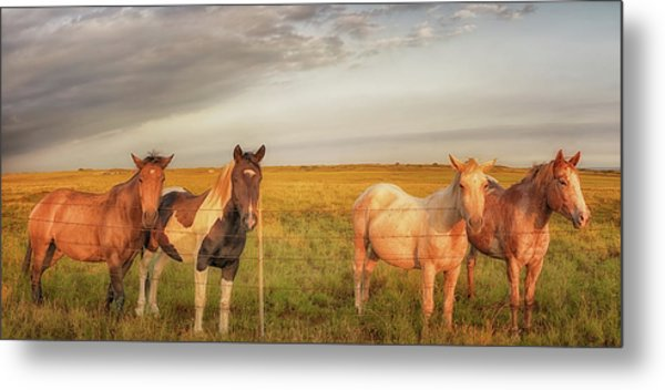 Metal Print featuring the photograph Horses At Kalae by Susan Rissi Tregoning