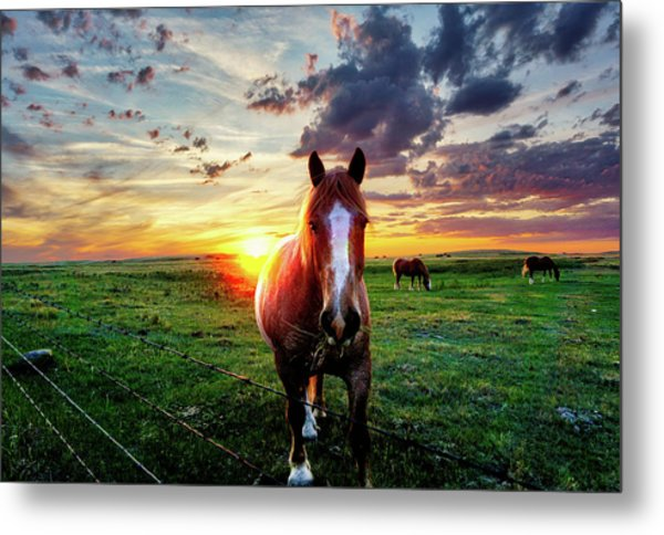 Horses At Sunset Metal Print