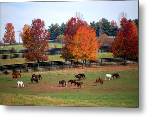 Horses Grazing In The Fall Metal Print