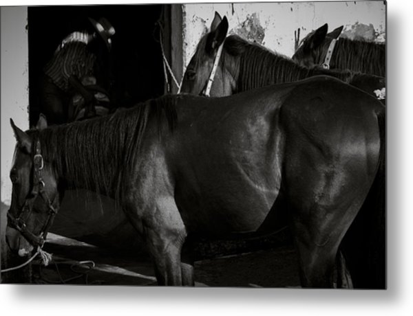 Horses In Mexico Metal Print by Dane Strom