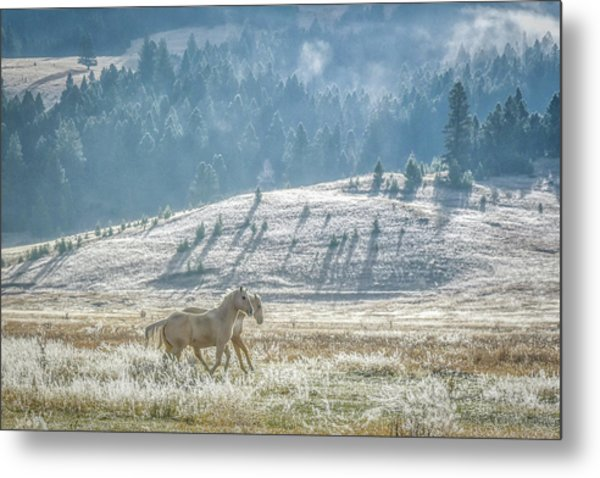 Horses In The Frost Metal Print