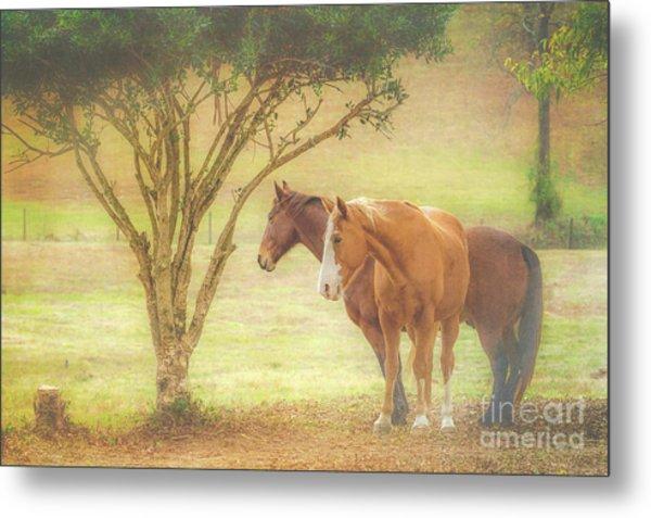 Horses In The Meadow Metal Print