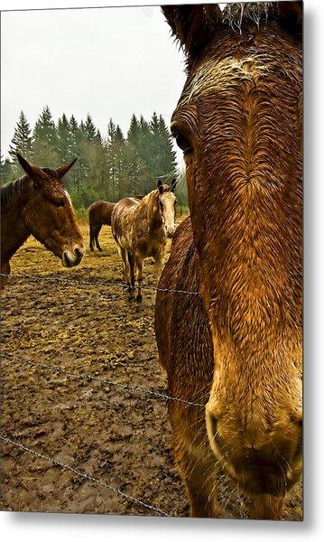 Horses In The Rain Metal Print by Dale Stillman