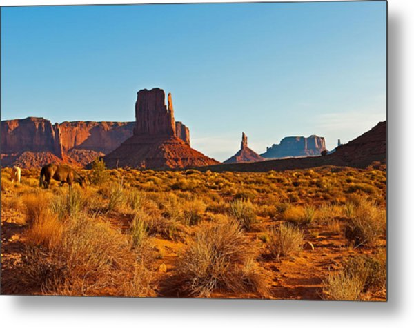 Horses In The Valley Metal Print by PhyllisAnn Mains