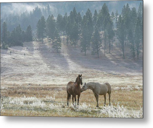 Horses On A Montana Ranch Metal Print