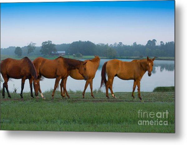 Horses On The Walk Metal Print