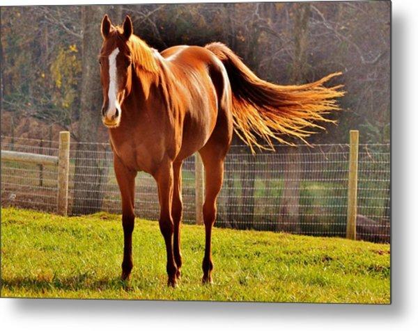 Horse's Tail Metal Print