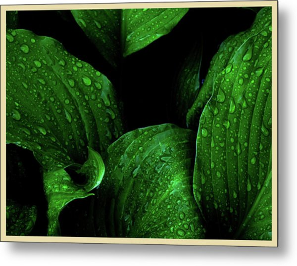 Hostas After The Rain I Metal Print