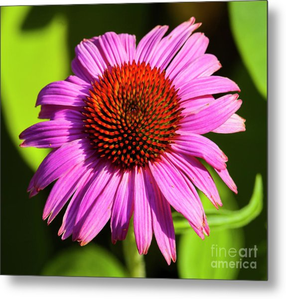 Hot Pink Flower Metal Print