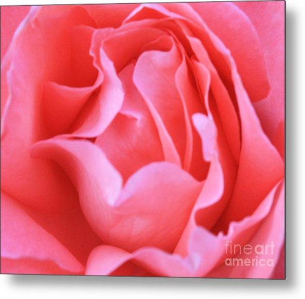 Hot Pink Petals Metal Print