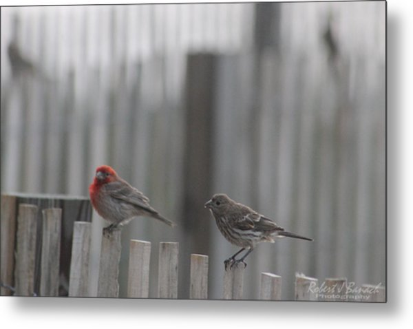 House Finches On The Fence Metal Print
