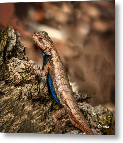 Hugo The Lizard Metal Print