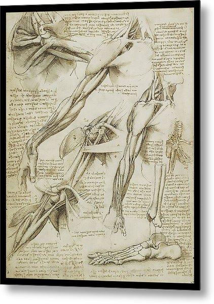 Human Arm Study Metal Print