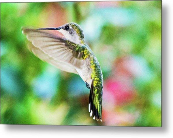Hummingbird 06 - 9-13 Metal Print by Barry Jones