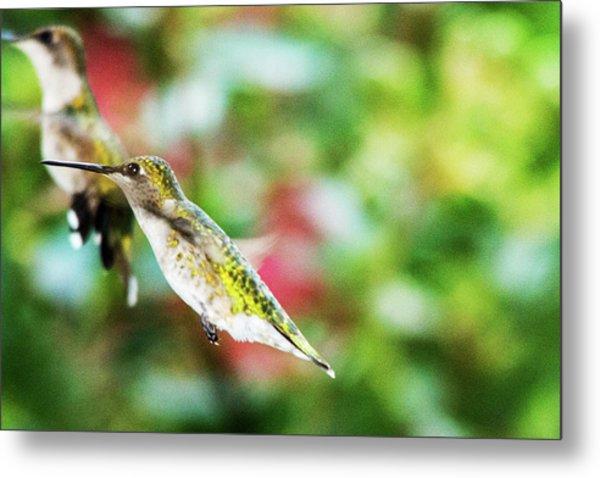 Hummingbird 07 - 9-13 Metal Print by Barry Jones