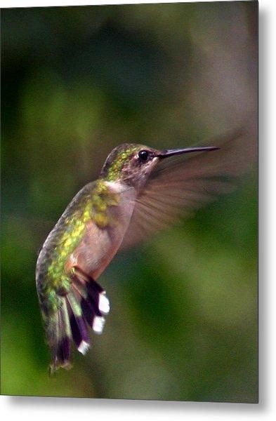Hummingbird 3 Metal Print