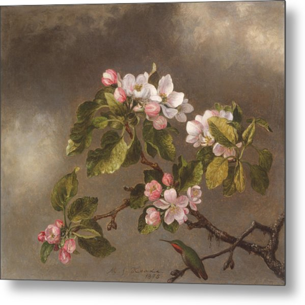 Hummingbird And Apple Blossoms Metal Print