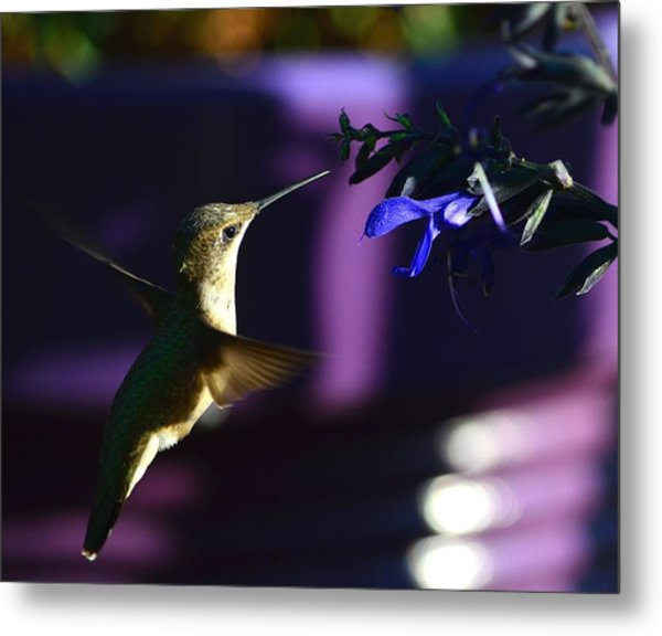 Hummingbird And Blue Flower Metal Print