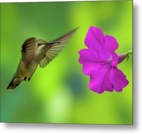 Hummingbird And Flower Metal Print