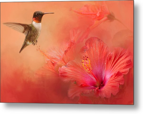 Hummingbird And Peach Hibiscus Metal Print