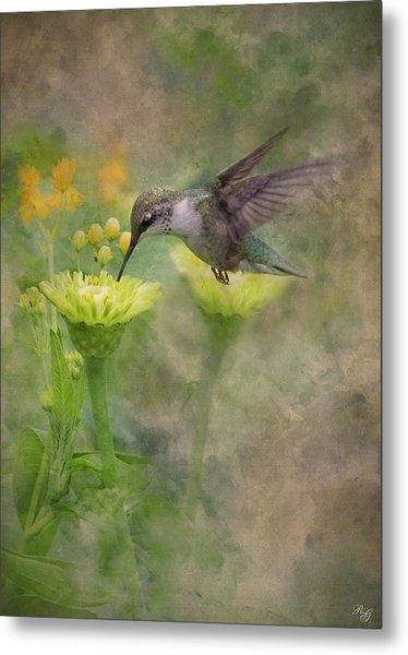 Hummingbird Art Metal Print