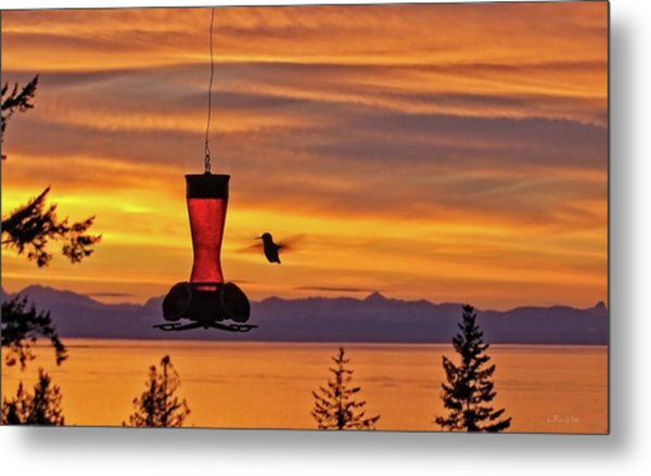 Hummingbird At Sunset. Metal Print