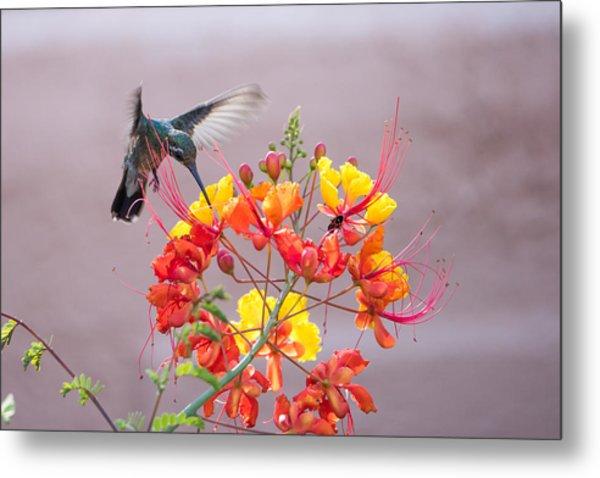 Hummingbird At Work Metal Print