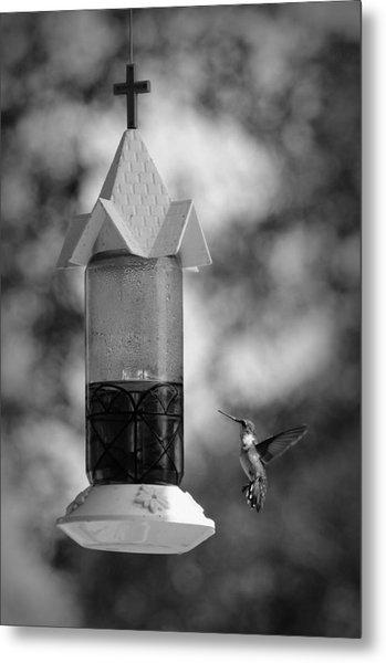 Hummingbird - Bw Metal Print