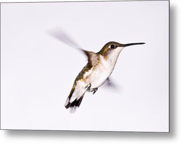 Hummingbird Metal Print by Edward Myers