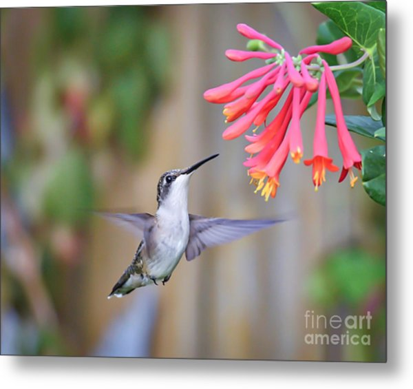 Hummingbird Happiness 2 Metal Print
