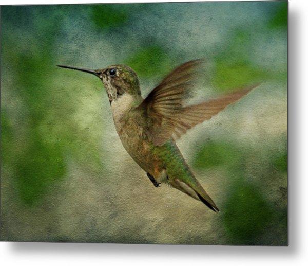 Hummingbird In Flight II Metal Print