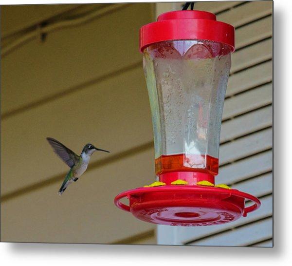 Hummingbird In Flight Metal Print