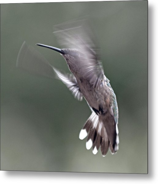 Hummingbird In The Country Metal Print