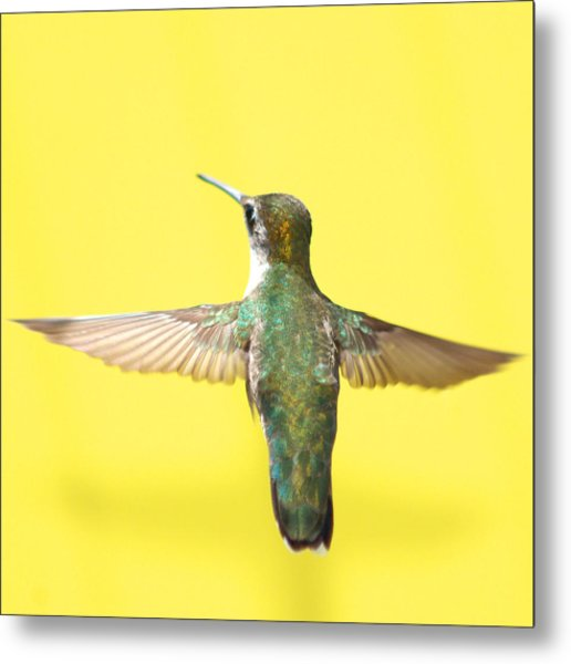 Hummingbird On Yellow 4 Metal Print
