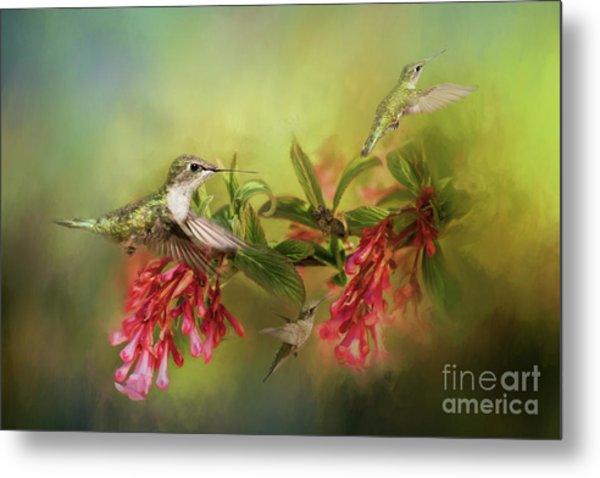 Hummingbird Paradise Metal Print