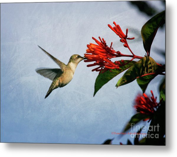 Hummingbird Red Flowers Metal Print