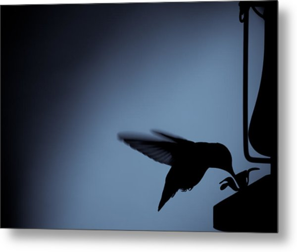 Hummingbird Silhouette Metal Print by Edward Myers