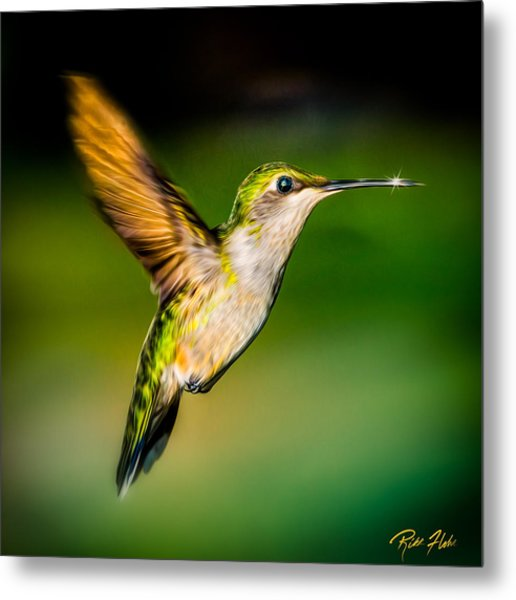 Hummingbird Sparkle Metal Print