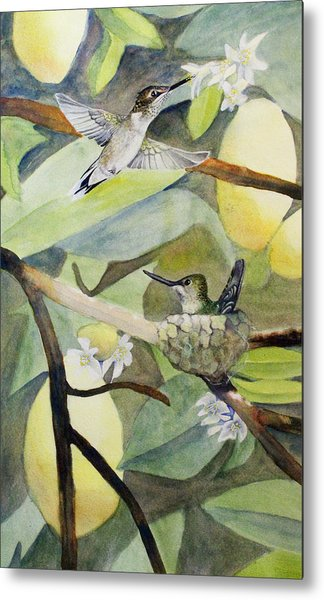 Hummingbirds And Lemons Metal Print