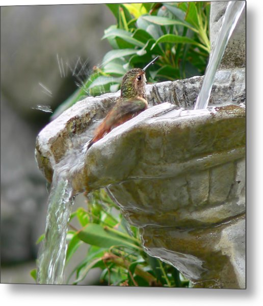 Hummingbirds Do Take Baths Metal Print