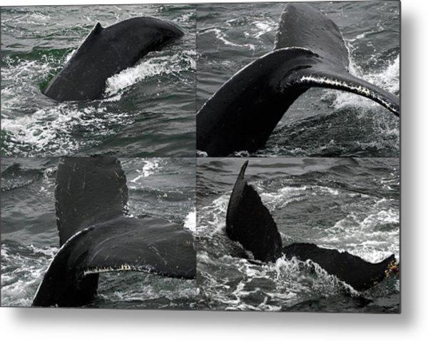 Humpback Whale Fluke Montage Metal Print