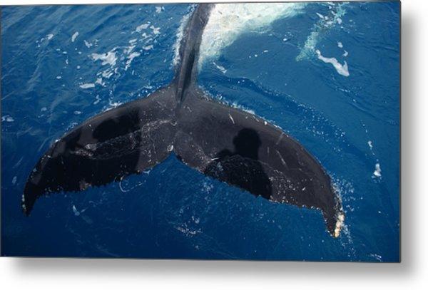 Humpback Whale Tail With Human Shadows Metal Print