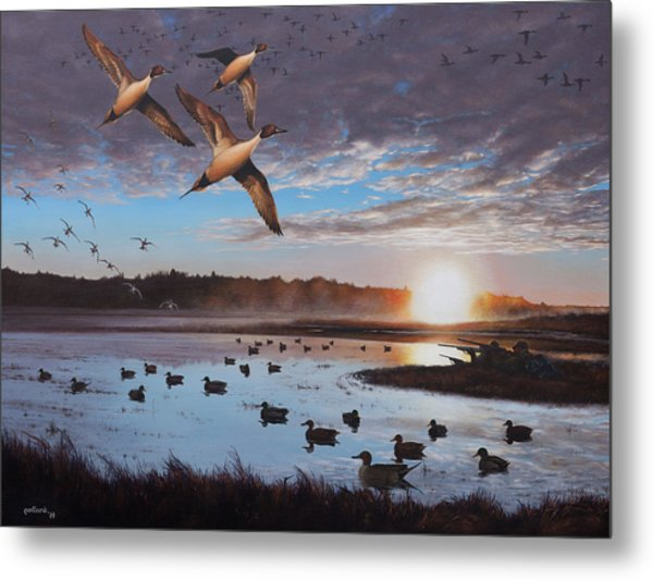 Humphrey Farm Pintails Metal Print