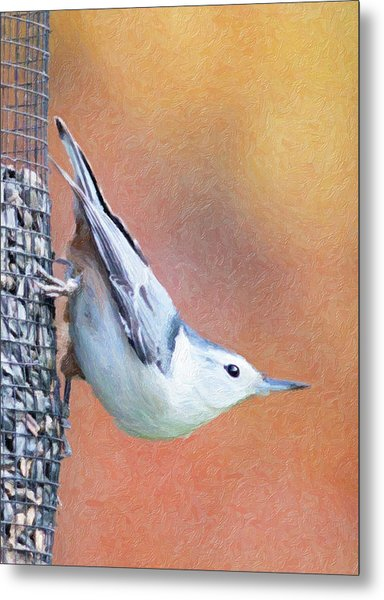 Hungry Nuthatch Metal Print